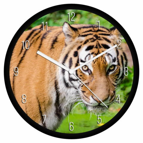 Tigris falióra - számos
